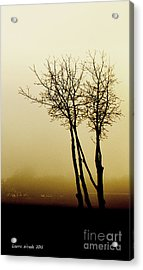 Naked Trees 1 Acrylic Print by Artist and Photographer Laura Wrede