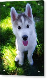 Nanook Of The North Acrylic Print by Bill Cannon