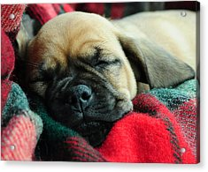 Nap Time Acrylic Print by Lisa Phillips