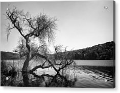 Napa Lake Acrylic Print by Francesco Emanuele Carucci