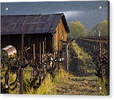 Napa Morning Acrylic Print by Bill Gallagher