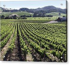 Napa Valley Vineyard Acrylic Print by Dee  Savage