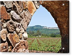 Napa Vineyard Acrylic Print by Shane Kelly