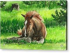 Napping Alberta Wild Foal Acrylic Print by Linda L Martin