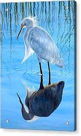 Narcissus Acrylic Print by AnnaJo Vahle