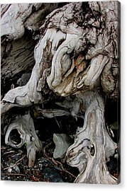 Narley Acrylic Print by Will Boutin Photos