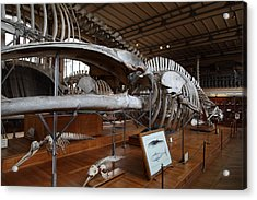 National Museum Of Natural History - Paris France - 01136 Acrylic Print by DC Photographer
