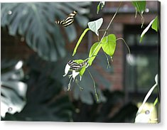 National Zoo - Butterfly - 12123 Acrylic Print by DC Photographer