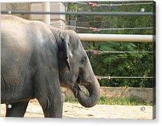 National Zoo - Elephant - 121212 Acrylic Print by DC Photographer