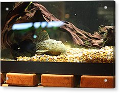 National Zoo - Fish - 011310 Acrylic Print by DC Photographer