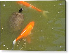 National Zoo - Fish - 011319 Acrylic Print by DC Photographer