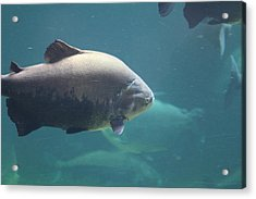National Zoo - Fish - 011320 Acrylic Print by DC Photographer
