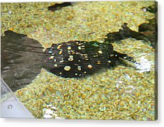 National Zoo - Fish - 01138 Acrylic Print by DC Photographer