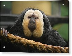 National Zoo - Mammal - 01136 Acrylic Print by DC Photographer
