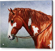 Native American Pinto Horse Acrylic Print by Crista Forest