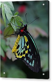 Natural Awakenings Acrylic Print by Juergen Roth