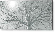 nature - art - Winter Sun  Acrylic Print by Ann Powell