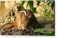 Nature Gone Wild-chipmunk Acrylic Print by Brittany Perez
