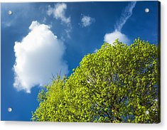 Nature In Spring - Bright Green Tree And Blue Sky Acrylic Print by Matthias Hauser