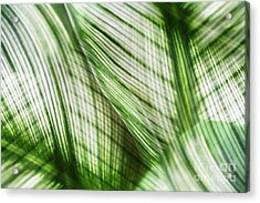 Nature Leaves Abstract In Green Acrylic Print by Natalie Kinnear