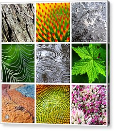Nature Patterns And Textures Square Collage Acrylic Print by Christina Rollo