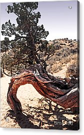 Nature's Abstract Acrylic Print by Linda  Parker