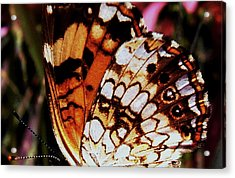 Natures Abstracts Butterfly Wings 005 Acrylic Print by George Bostian