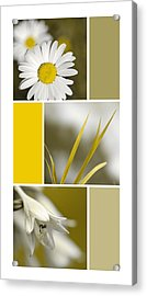 Nature's Beauty Golden Flowers Collage Acrylic Print by Christina Rollo