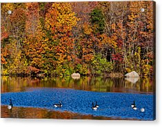 Natures Colorful Autumn Acrylic Print by Karol Livote