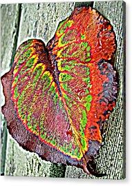 Nature's Glory Acrylic Print by Barbara McDevitt
