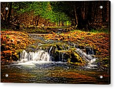 Nature's Glory Acrylic Print by Cheryl Cencich