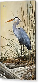 Natures Grace Acrylic Print by James Williamson