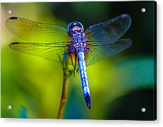 Natures Jewels Acrylic Print by Lesley Brindley