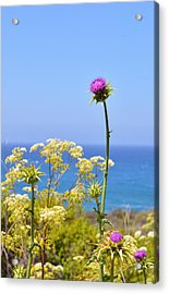 Natures Song Acrylic Print by Lynn Bauer