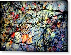 Natures Stained Glass Acrylic Print by Karen Wiles