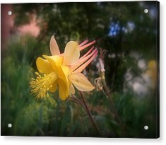 Natures Star Acrylic Print by Heather L Wright