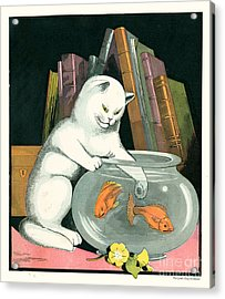 Naughty Cat Fishes For Goldfish In Fish Bowl Acrylic Print by Pierpont Bay Archives