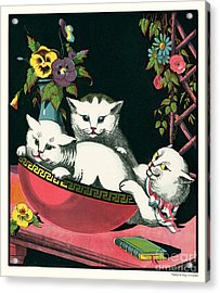 Naughty Cats Play In Antique Pink Bowl With Book And Sweet Williams Flowers Acrylic Print by Pierpont Bay Archives