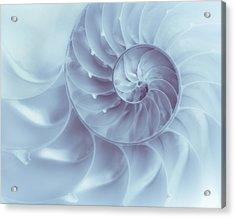 Nautilus - Dreaming Of The Sea Acrylic Print by Tom Mc Nemar