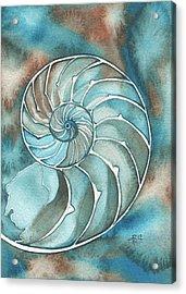 Nautilus Acrylic Print by Tamara Phillips