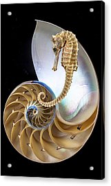 Nautilus With Seahorse Acrylic Print by Garry Gay