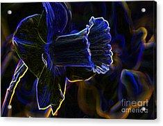 Neon Flowers Acrylic Print by Charles Dobbs
