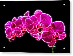 Neon Orchid Acrylic Print by Dan Sproul