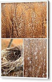 Nest Field Acrylic Print by AR Annahita