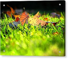 Nestled Acrylic Print by Greg Simmons