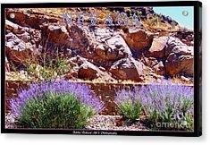 Nevada Acrylic Print by Bobbee Rickard
