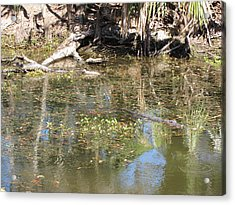 New Orleans - Swamp Boat Ride - 121251 Acrylic Print by DC Photographer