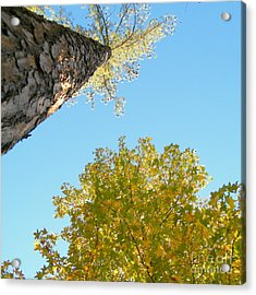 New Perspective On Autumn Leaves Acrylic Print by Cheryl Hardt Art