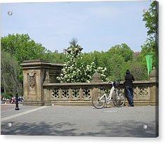 New York City - Central Park - 121210 Acrylic Print by DC Photographer