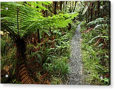 New Zealand Forest Acrylic Print by Les Cunliffe